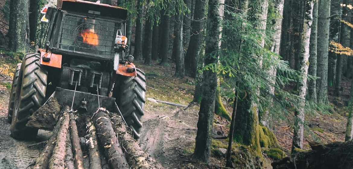 Forestry & Logging Swagged Wire Ropes | DruForest